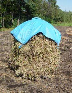 小豆の栄養と機能性