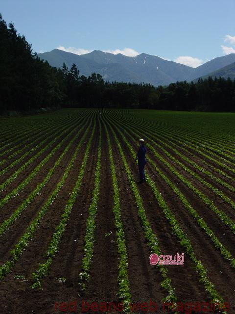 なぜ十勝が小豆の産地なの?
